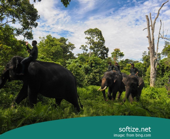 INDONESIA-CONSERVATION-ANIMAL-ELEPHANT